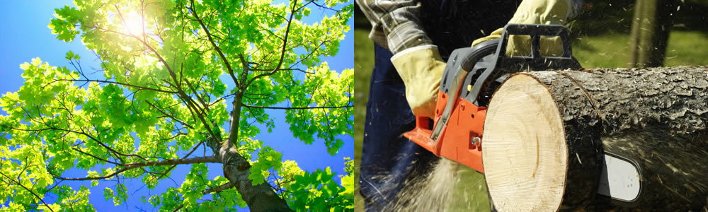 Tree Services Circle Pines